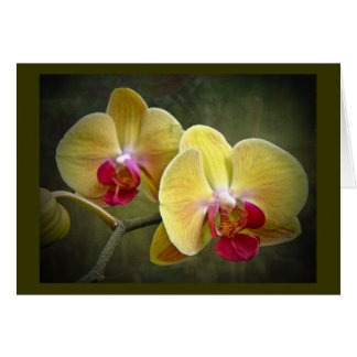 Yellow Moth Orchids - Phalaenopsis Card