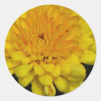 Yellow Mum Round Stickers