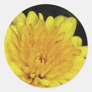 Yellow Mum Round Sticker