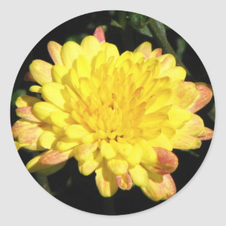 Yellow Mum Sticker