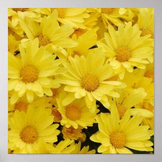Yellow Mums Photo Print