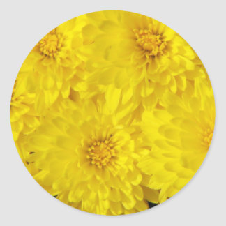 Yellow Mums Round Sticker