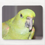 Yellow-Naped Amazon Parrot Mousepad