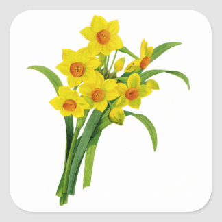 Yellow Narcissus by Pierre Joseph Redoute Square Sticker