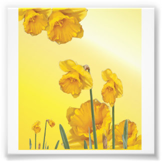 Yellow Narcissus Daffodil Photo Print