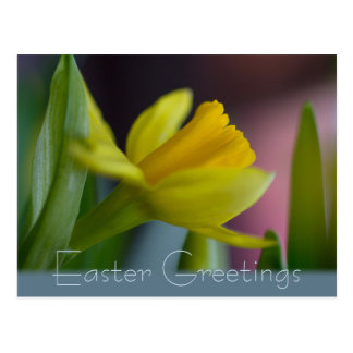 Yellow narcissus flower CC0735 Easter greetings Postcard