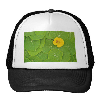 Yellow nasturtium flower on bed of nasturtium hats
