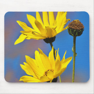 Yellow on Blue Mouse Mats