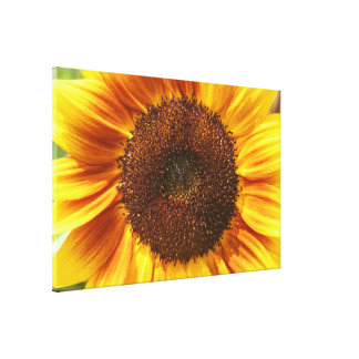 Yellow, Orange, and Brown Sunflower Canvas Print