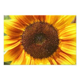 Yellow, Orange, and Brown Sunflower Print Photo Art