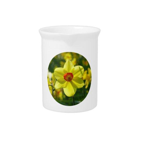 Yellow orange Daffodil 02.2_rd Drink Pitchers