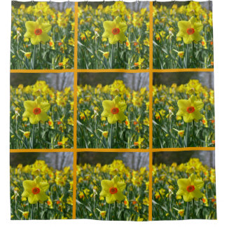 Yellow orange Daffodils 01.0, Welcome spring! Shower Curtain