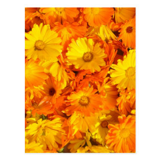 Yellow-orange marigold flowers postcard