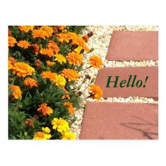 Yellow Orange Marigold Flowers Postcards