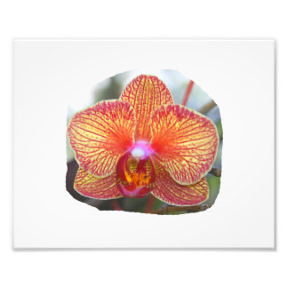 Yellow Orange Orchid Flower Picture Photo Print