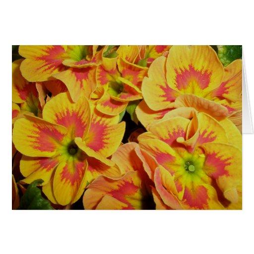 Yellow Orange Primrose Note Card