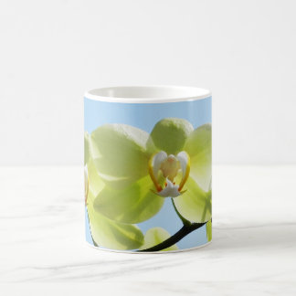 Yellow orchid - cups mugs