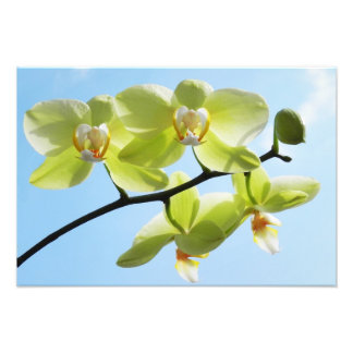 Yellow orchid - photo printing
