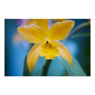 Yellow Orchid Posters