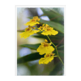 "Yellow Orchids Acrylic Wall Art, 10"" x 14"" Acrylic Wall Art"