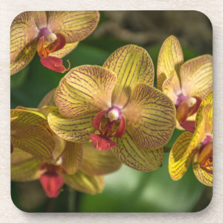 Yellow orchids hard plastic coasters