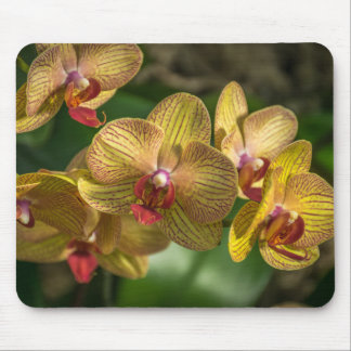 Yellow orchids mousepad