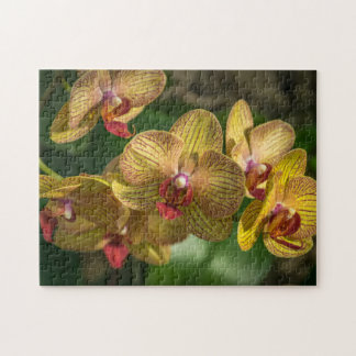 Yellow orchids photo puzzle
