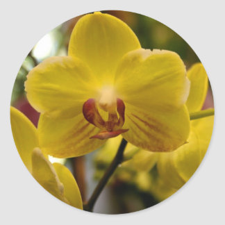 Yellow Orchids stickers