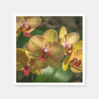 Yellow orchids up close disposable napkins
