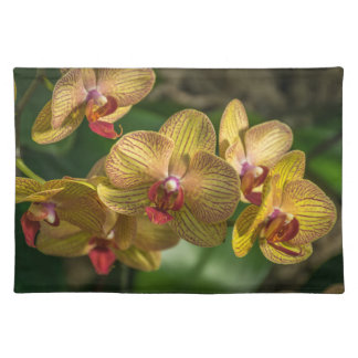 Yellow orchids up close placemat