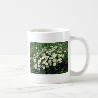 Yellow Ox-Eye-Daisy Leucanthemum Vulgare flowers Mug