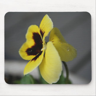 Yellow pansy mouse pads