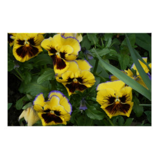 Yellow Pansy ~Print~ Poster