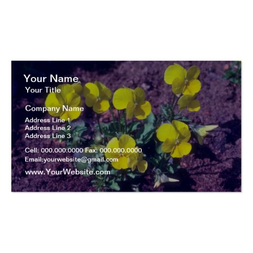 yellow Pansy (Viola) flowers Business Card Templates