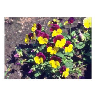 yellow Pansy Viola flowers Invitations