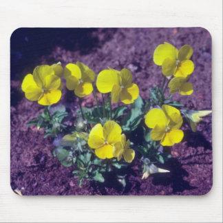 yellow Pansy (Viola) flowers Mousepad