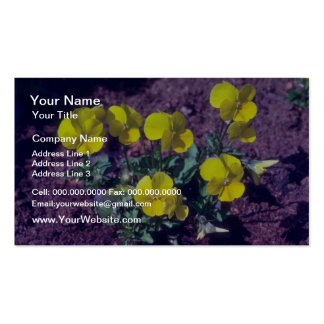 yellow Pansy (Viola) flowers Pack Of Standard Business Cards