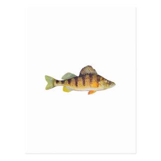 Yellow Perch (untitled) Postcard