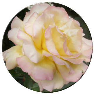 Yellow Pink English Roses Photograph Plate