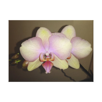 Yellow Pink Gradient Dendrobium Orchid Canvas Print