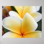 Yellow Plumeria Flower Frangipani Floral Design Poster