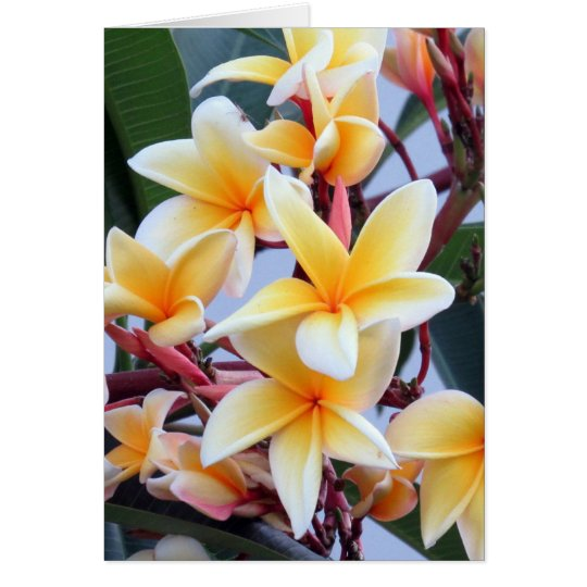 Yellow Plumeria Greeting Card