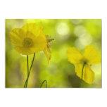 Yellow Poppies Photo Personalised Invitations