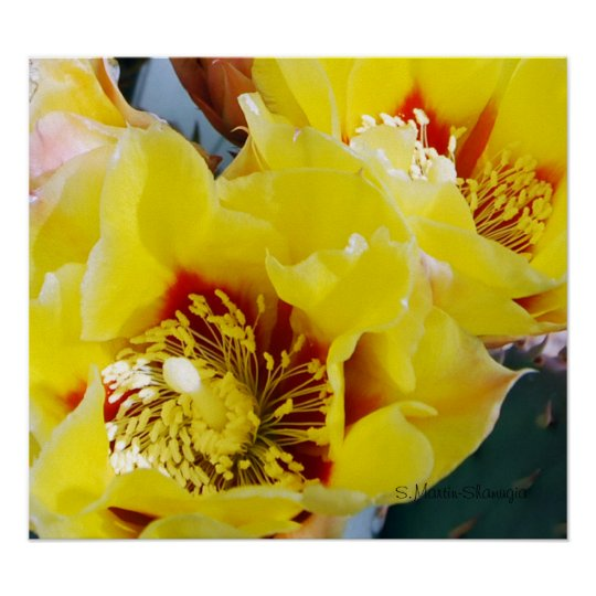 Yellow Prickly Pear Cactus Poster