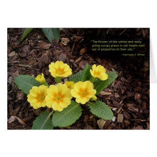 Yellow primroses: Spring is on the way! Greeting Card