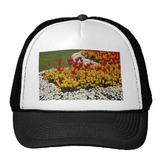 yellow Rainbow flowerbeds flowers Hat