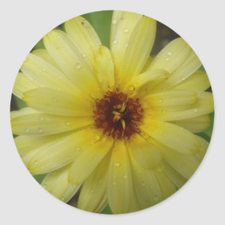 Yellow Raindrops Marigold Stickers