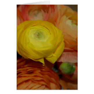 Yellow Ranunculus Card