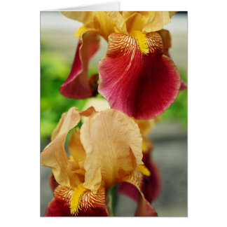 Yellow Red Iris Card