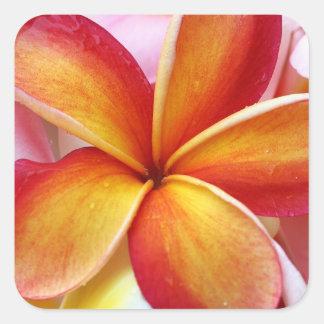 Yellow Red Plumeria Frangipani Hawaii Flowers Square Sticker